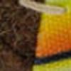 WOOLY BROWN/SERAPE STRIPE